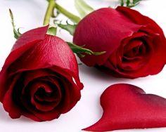 With Love rose    Download More Free Wallpaper Visit Freedesktopwallpaperz.net
