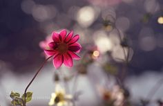 http://ift.tt/1ZY8ZTJ #Nature breathtaking #Photos Dream... by bahallavi http://ift.tt/1PkyW87