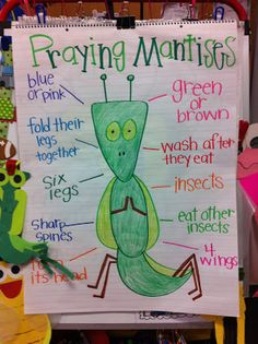 Praying Mantis Anchor Chart