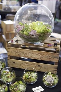 Succulent Terrariums for outdoor weddings?
