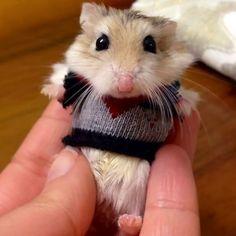 15 Animales diminutos con pequeños jerséis que te harán suspirar