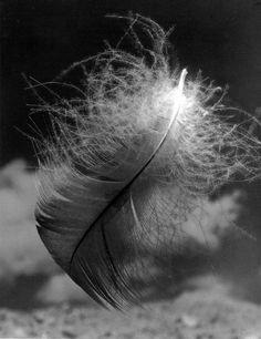 Texture : by / selon Andreas Feininger