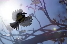 Wildlife Photography 2013: Great tit