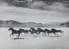 wild wild horses. Horse is my totem animal: adventure, freedom, travel ~ Marie