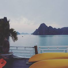 Good morning Vietnam  #vietnam #halong #halongbay #cruise #goodmorning #asia #travelcouple #travel #traveling #workandtravel #vacation #visiting #instatravel #instago #instagood #trip #holiday #photooftheday #fun #travelling #tourism #tourist #instapassport #instatraveling #mytravelgram #travelgram #travelingram #igtravel by brendaontour