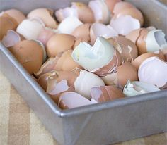 15 Surprising Uses For Eggshells