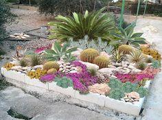 aménagement jardin de rocaille palmiers-cactus-plantes-succulentes