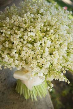 Bouquet of Lily of The Valley flowers wrapped in white ribbon White Flowers, Beautiful Flowers, Tiny Flowers, Birth Flowers, Exotic Flowers, Flowers Garden, Tropical Flowers, Yellow Roses, Purple Flowers