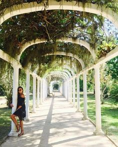 The Botanical Gardens (Jardim Botânico) of Rio are some of the most unique we've seen! Find the coordinates to this shot on our Rio Photoguide- http://sidewalkerdaily.com/photoguide-rio-de-janeiro/ #instatour