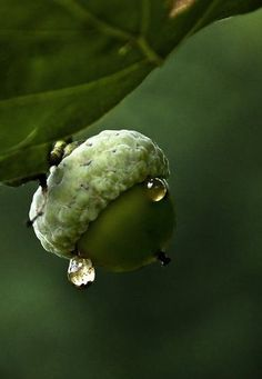 """""""The creation of a thousand forests is in one acorn."""" Ralph Waldo Emerson"""