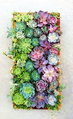 vertical succulent wall art… and I don't like succulents but this is art in color! I may try this - do deer eat succulents? Deco Floral, Arte Floral, Succulent Wall Art, Succulent Frame, Succulent Display, Succulent Ideas, Cactus Y Suculentas, Cool Plants, Live Plants