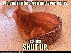 LOLcats is the best place to find and submit funny cat memes and other silly cat materials to share with the world. We find the funny cats that make you LOL so that you don't have to.