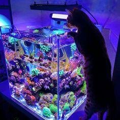 Fishing in Salt Water Saltwater Aquarium Setup, Sea Aquarium, Saltwater Fish Tanks, Aquarium Design, Marine Aquarium, Aquarium Ideas, Marine Fish Tanks, Marine Tank, Nano Reef Tank