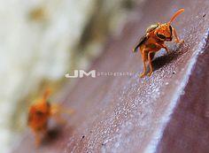 Estas avispas reposan en el Rio Cogoyo, por allá por Rosario de Perijá en el estado Zulia/Venezuela