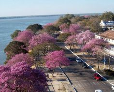 Corrientes - Argentina Ushuaia, Art Nouveau Arquitectura, Pink Flowering Trees, Colorful Plants, What A Wonderful World, Oh The Places You'll Go, Beautiful Landscapes, Wonders Of The World, Country