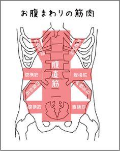 タイマッサージの解剖学 Muscle Anatomy, Design Reference, Drawing Tips, Physics, Massage, Health Fitness, Therapy, Relax, Medical