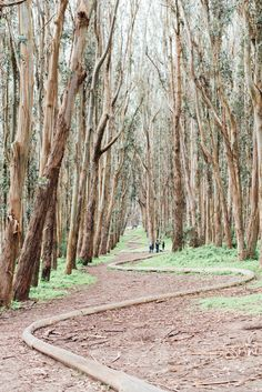 Andy Goldsworthy's Wood Line sculpture in the Presidio xo
