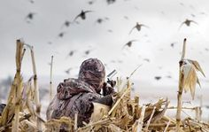 If you're just getting started with duck hunting, it can seem like you have a daunting task ahead of you. But we are here to help, read out blog on tips for beginning duck hunters and then head over to our website to buy ammo online.
