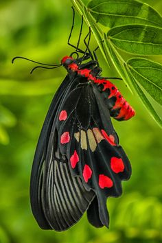 Butterfly - Nature - Macro photography - title Strong Color -by Boris Smokrovic