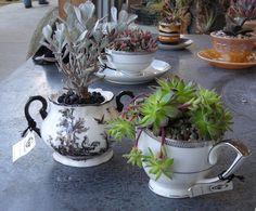 Succulents in tea cups and pots