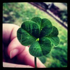 Four leaf clover :-)