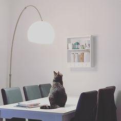 I see food!  #luckythecat #love #cute #catsofsalzburg #unterfoehring #germany #cat #meow #ilovemypet #catlovers #lovekittens #instapet #catsagram #kitten #kitty #catstagram #kittycat #catsofinstagram #ilovemycat #catlove #catoftheday #furry #cats_of_instagram #cats #catlife #katze #katzenliebe #miezekatze #bestmeow