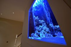 And I don't even care for aquariums/fish tanks...but...this is pretty awesome