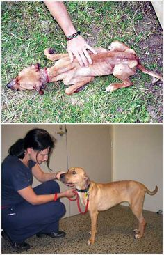 Eve, a rescued dog, before and after
