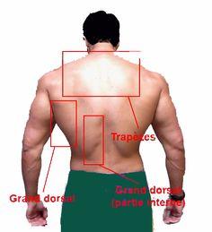 trapèze-muscle