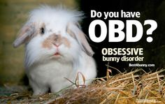 Do you have OBD? (Obsessive Bunny disorder) Find out. Definitely, I have it! Rabbit Cages, House Rabbit, Cute Baby Bunnies, Funny Bunnies, Funny Rabbit, Pet Rabbit, Baby Animals, Funny Animals, Cute Animals