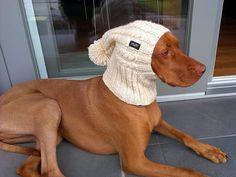 Chien chapeau / chapeau de Greyhound / Beanie chien chapeau / chapeau chien tricoter à la main / câble chien Hat / chien Snood
