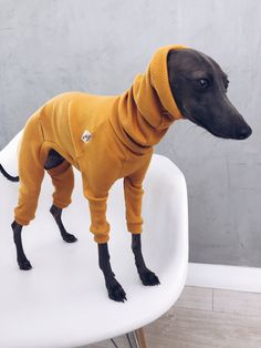 italian greyhound and whippet clothes / iggy jumpsuit / Dog Sweater / dog clothes / ropa para galgo italiano y whippet/ MUSTARD JUMPSUIT Underwear, Pet Chickens, Italian Greyhound, Whippet, Pet Clothes, Four Legged, Warm And Cozy, Dinosaur Stuffed Animal, Hand Made