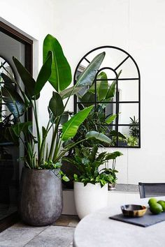 10 Excellent Ideas To Display Living Room Indoor Plants Indoor plants decoration makes your living space more comfortable, breathable and luxurious. An Indoor plant is a houseplant that grows indoors at residences and offices. Interior Plants, Interior And Exterior, Botanical Interior, Plantas Indoor, Jungle Decorations, House Decorations, Room Deco, Decoration Plante, Leaf Decoration