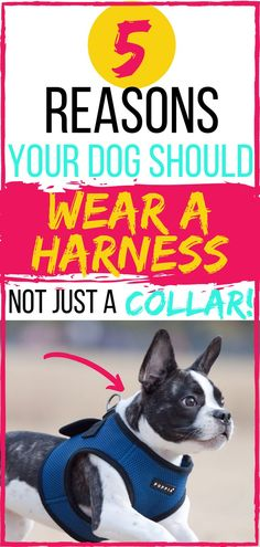 Are you putting your pet at risk? In this dog collar vs dog harness post, we'll explain 5 reasons your dog should wear a harness on your daily dog walks. Easy Dog Treat Recipes, Dog Accesories, Dog Health Tips, Pet Dogs, Pets, Dog Travel, Dog Care Tips, Training Your Dog, Brain Training