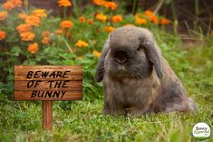 Beware of the Bunny!
