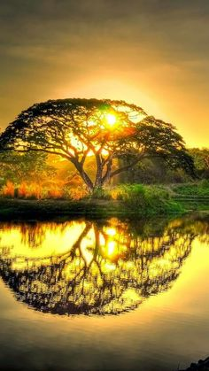 Beautiful sunset that makes the tree look like the Celtic Tree of Life! Beautiful Sunset, Beautiful World, Beautiful Images, Beautiful Things, Beautiful Forest, Stunningly Beautiful, Beautiful Scenery, Beautiful People, Sunset Photography