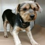 Safe Dogs 2015-05   Help us Save NYC AC&C Shelter Dogs