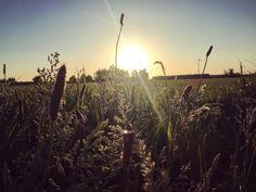 Morning beauty Fields, Nature Photography, Sunrise, Celestial, Outdoor, Beauty, Outdoors, Sunrises, Cosmetology