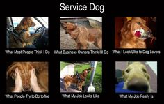 These set of pictures really shows the true story of how the general public looks at service dogs.