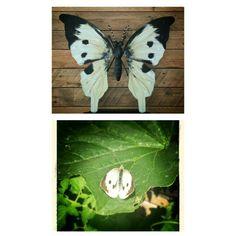 Koolwitje vlinder  Www.creativeartbyjessica.nl