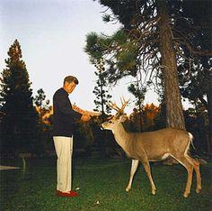 John F. Kennedy feeding a deer.