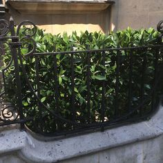 We manufacture Artificial Hedges to order, as we manufacture we can use different foliages to the traditional boxwood.  The foliage used in this image is Artificial Bay.  Contact Emily if this is of interest to you Emily@brightgreen.co.uk