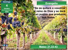Vineyard, Outdoor, The Kingdom Of God, Outdoors, Outdoor Games