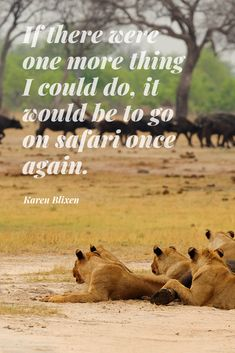 30 #Safari #Quotes to #Inspire You About #Africa. Looking for a new and exciting #adventure? These 30 famous quotes and safari #sayings will literally make you fall in #love with Africa! 😉 This is a very personal list. Some of these safari quotes first inspired me to #explore Africa, many many moons ago. These safari quotes continue to inspire me. #quote #travel #Blixen #KarenBlixen #lions #buffalo
