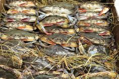 Soft-Shell Crabs are here!