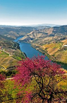 Douro River Valley, the winding, a terraced region that produces the country's beloved port wine. This is Portugal's answer to Germany's romantic Rhine River Douro Portugal, Visit Portugal, Spain And Portugal, Portugal Travel, Places To Travel, Places To Go, Magic Places, Voyager Loin, Douro Valley
