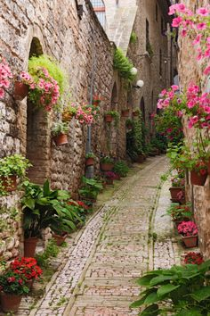 Flowered Pathways. I love the quaintness of this and would love to live in a place like this.  I'm sure it's in Europe.
