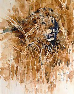 Löwe-in-Kirawira