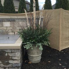 Holiday planters with birch and boxwood