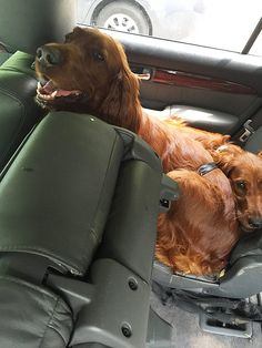 Two Dogs Left in Car on Sweltering Day Saved By PEOPLE Reporter, Police and Firemen http://www.peoplepets.com/people/pets/article/0,,20933290,00.html